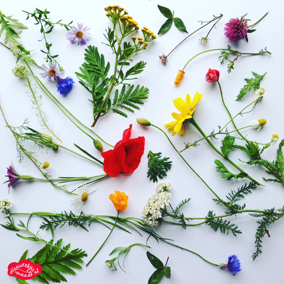 Spring flower collage by Dieuwertje van de moosdijk